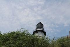 Lighthouse hidden by bushes