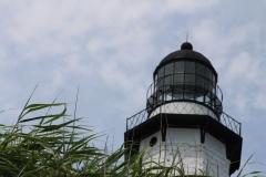 Lighthouse hidden by bushes_4