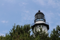 LIghthouse in shrubbery